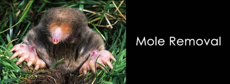 photo ARG Mole Removal