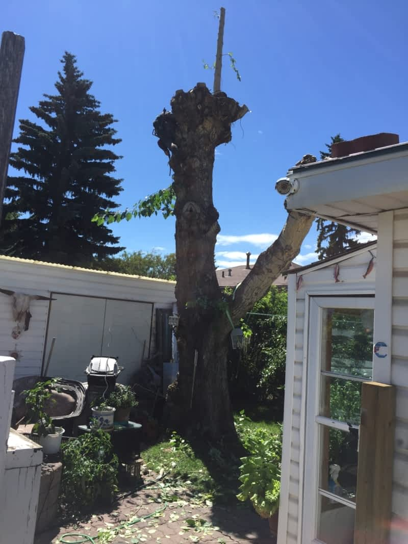photo R&T Tree Removal Services Inc