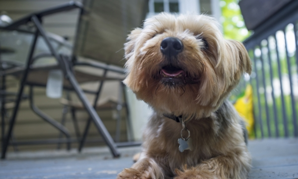 The dog days of summer: Toronto's top pet-friendly patios