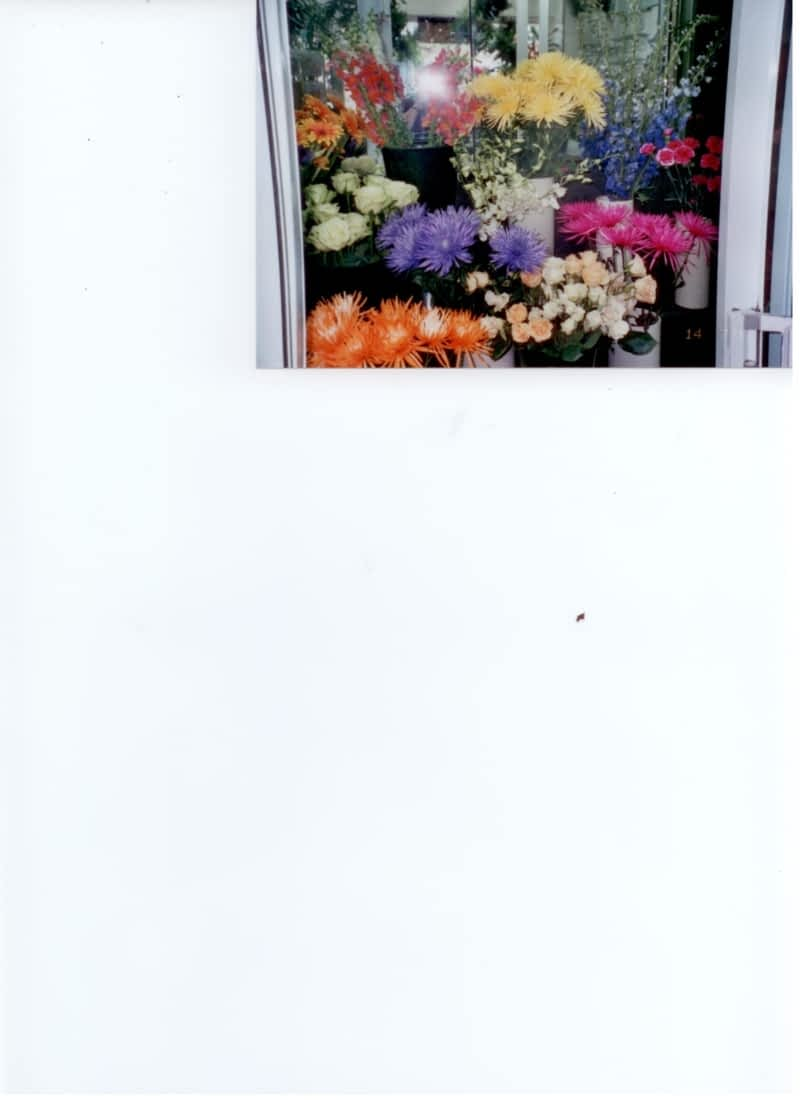 photo Florist Royal (Gala D'Outremont)