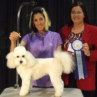 Foxy Dog Grooming & Boutique - Pet Grooming, Clipping & Washing - 250-756-0206