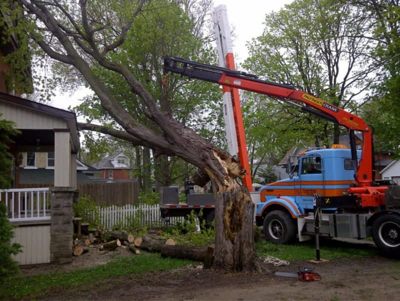 photo Lange Bros Tree Service