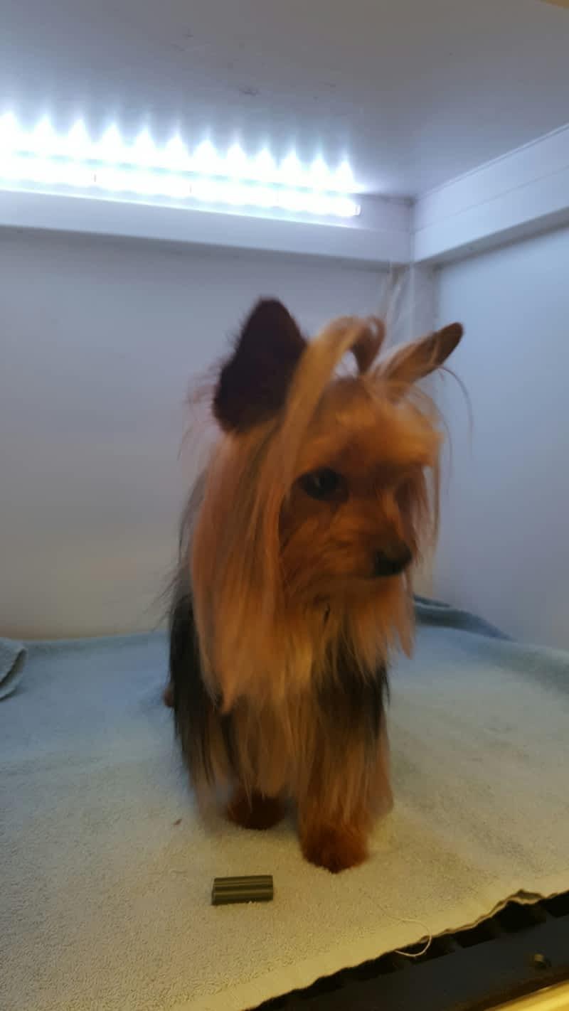 Dog Grooming Mississauga Reviews