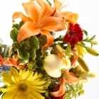Brant Florist - Fleuristes et magasins de fleurs