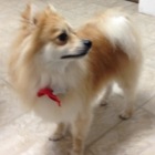 Tender Paws Professional Dog Grooming - Pet Grooming, Clipping & Washing - 250-619-1128