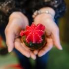 Fleurs & Pensées S.E.N.C. - Florists & Flower Shops - 450-741-7400