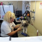 Dog City Grooming - Pet Grooming, Clipping & Washing - 905-688-8883