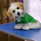 La Boîte à Chiens Salon de Toilettage - Pet Grooming, Clipping & Washing - 418-838-9112