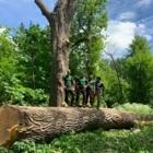 Arboriste Expert - Service d'entretien d'arbres - 450-550-9456