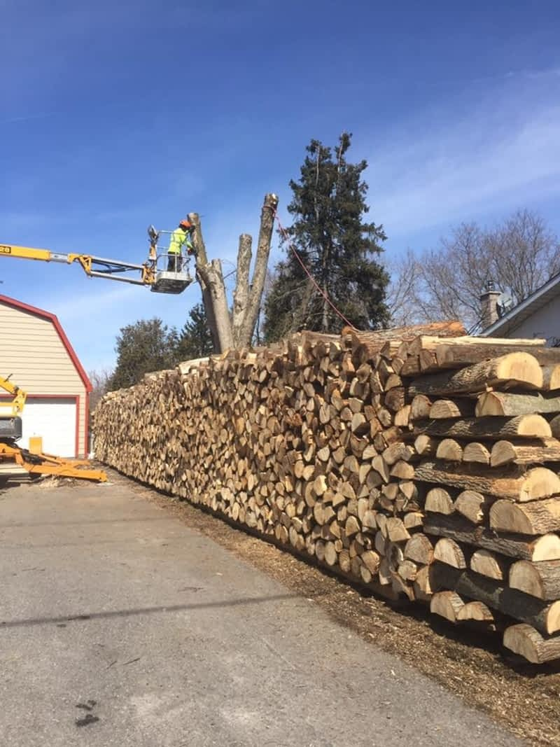 Top Notch Tree Maintenance And Removal Chesterville On