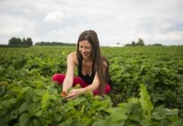 Farm fresh: A roundup of Edmonton's top U-pick farms