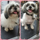 Melia Spa Pour Animaux Inc - Pet Grooming, Clipping & Washing