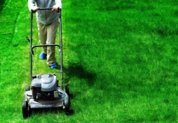 A cut above: Lawn mower emporiums in Calgary