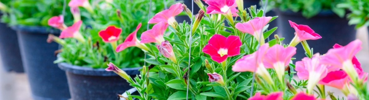 Where to find the perfect plants for your garden in Edmonton