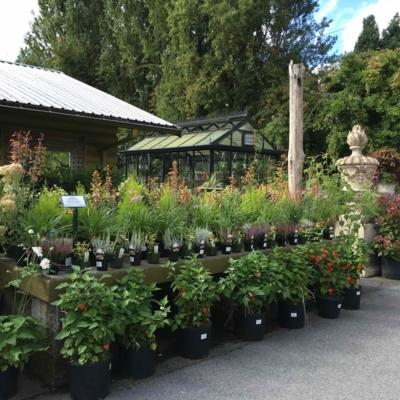 Southlands Nursery - Pépinières et arboriculteurs