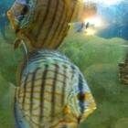 Wild Fish Aquarium - Pet Shops - 905-451-9453