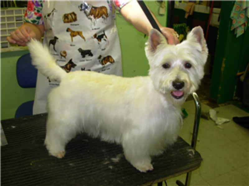 Dog Grooming Clippers Repairs Calgary