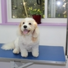 PAWSitively Beautiful Dog Grooming - Toilettage et tonte d'animaux domestiques