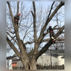 Gee's Tree Removal Service - Tree Consultants - 705-255-7047