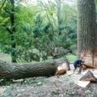 Arbo Ambiance - Tree Service - 514-962-0228