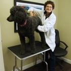 Dr Barbara Sloat - Chiropractors DC - 905-304-8687