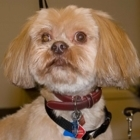 Ruff Cuts Pet Grooming - Pet Care Services - 905-335-0898