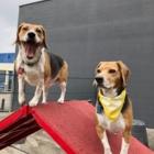 Bowdog - Pet Sitting Service