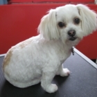 Jeanette's Dog Grooming - Toilettage et tonte d'animaux domestiques - 709-689-0626