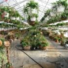 Moe's Gardens & Greenhouse - Centres du jardin