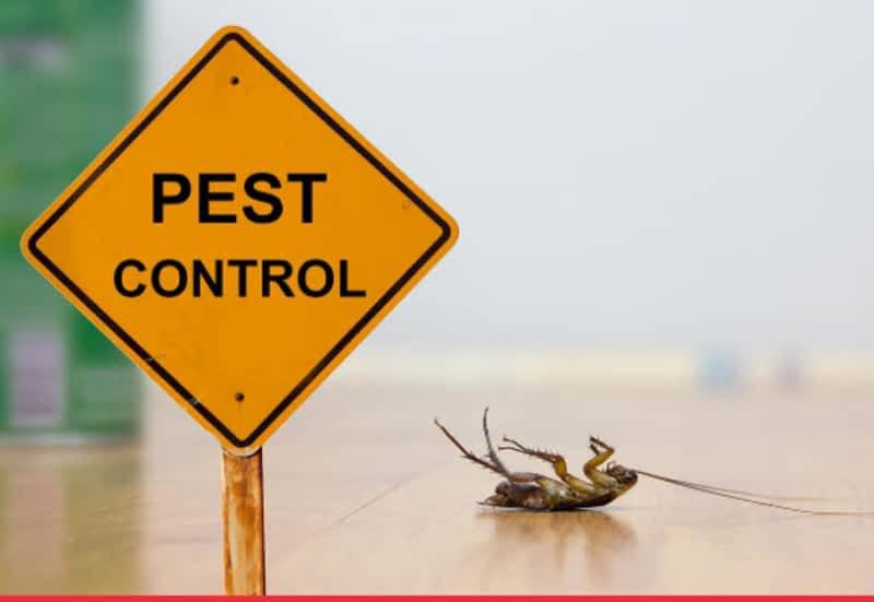 photo Lady Bug Pest Control