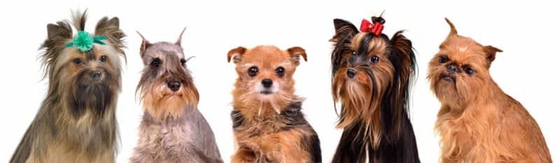 photo Salon De Beauté Canine
