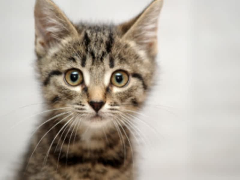 Cat Sitter Toronto Toronto On 2320 Gerrard St E