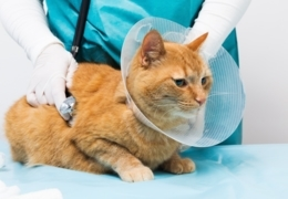 The best Vancouver vets for your pets