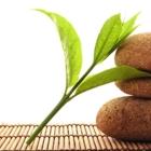 Blue Orchid Wellness - Registered Massage Therapists