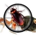 Canadian Pest Solutions - Pest Control Services