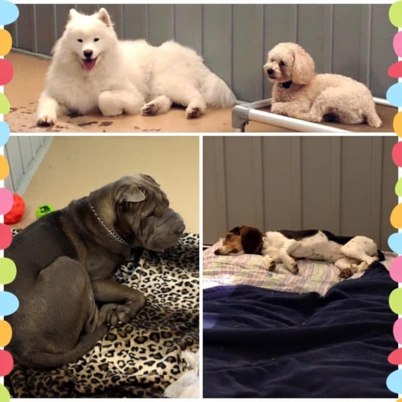 Furry Friends Dog Grooming Ottawa