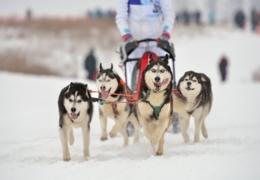Mountain park winter activities near Calgary