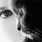Toilettage à Domicile pour Chats - Toilettage et tonte d'animaux domestiques - 514-969-0070