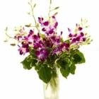 Brant Florist - Florists & Flower Shops