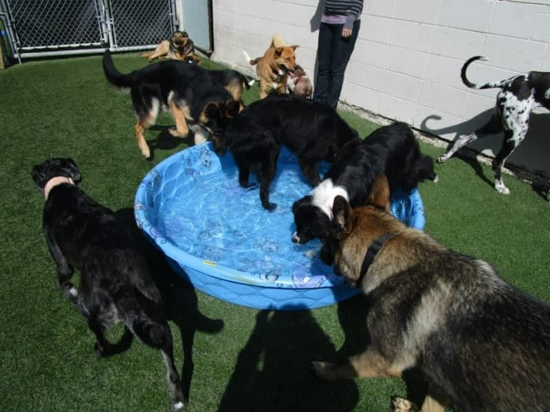 Pet Dog Beds In Scarborough