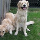 Bonez & Katnip Pet Services - Garderie d'animaux de compagnie