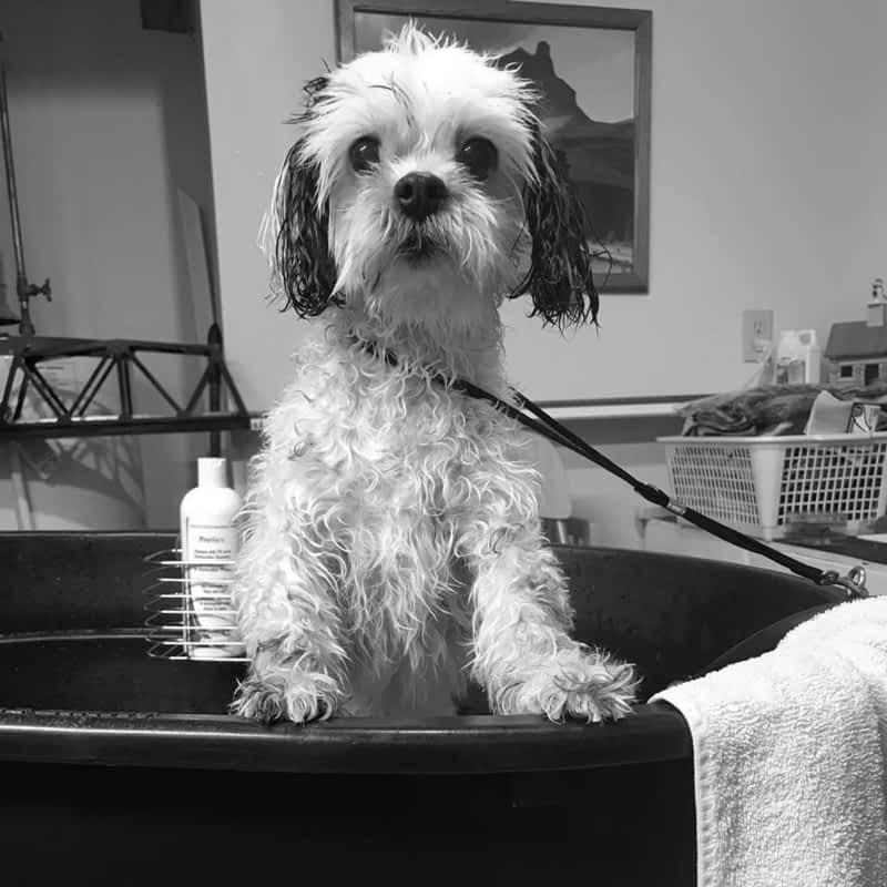 Dog Grooming School Canada