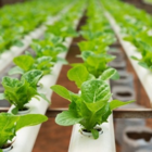 Hydro Performance Inc - Hydroponic Systems & Equipment