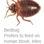 Klondike Pest Control Services - Extermination et fumigation