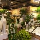 Vertuose Inc - Magasins de plantes d'intérieur