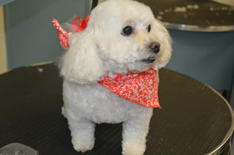 Dog Grooming School Calgary