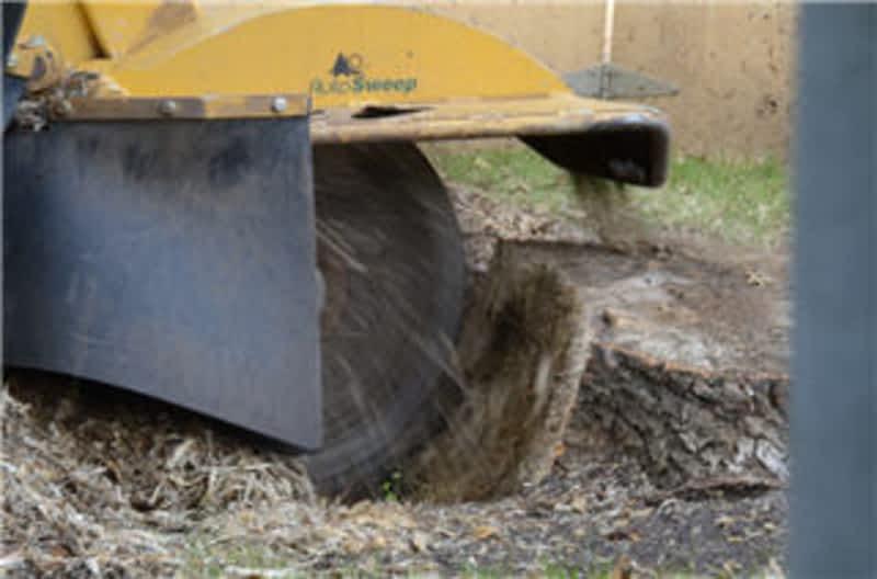photo Stump Solution
