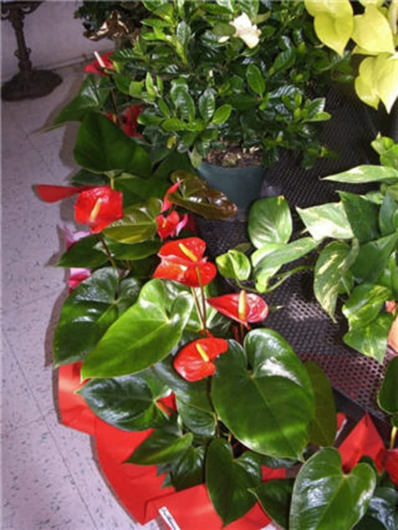 Fleuriste fleurs de cactus mont saint hilaire qc 317 for Fleuriste fleurs