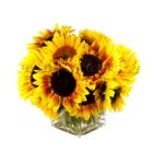 ecostems - Florists & Flower Shops - 416-214-6479