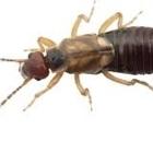 Abiosphère Extermination - Pest Control Services - 514-495-1000